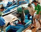 """Giám đốc Cảng cá Quy Nhơn sẽ """"bay"""" chức nếu cảng bị EU bắt lỗi"""