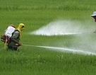 Phải coi thuốc bảo vệ thực vật là hàng hóa đặc biệt, kiểm soát chặt chẽ