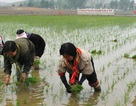 Mỹ cấm các nhóm viện trợ nhân đạo tới Triều Tiên