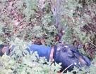 Bắt thêm 1 đồng phạm trong vụ đánh đập con nợ đến chết rồi vứt xác ven đường
