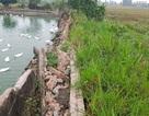 Dự án nuôi trồng thủy sản gần 12 tỷ đồng bỏ hoang: Sở Nông nghiệp lên tiếng