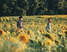 Vì sao phim Việt được lựa chọn tham gia LHP Quốc tế Hà Nội 2018 thiếu sự đặc sắc?