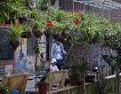 Những vườn treo nhỏ xinh, mát mắt dọc ngõ phố Hà Nội