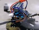 """Lộ diện robot """"siêu nhỏ"""" có thể tải vật nặng gấp… 40 lần trọng lượng của mình"""