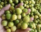 Sốt chanh rừng Mẫu Sơn: Công sở rỗi việc, chị gái bán cả tấn mỗi tuần