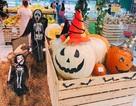 Phát cuồng với bí ngô Halloween khổng lồ lần đầu được trồng ngay tại Việt Nam