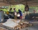 Truy trách nhiệm cán bộ để xưởng gỗ trái phép hoạt động tràn lan tại Nghệ An!