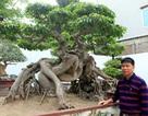 Đại gia chơi cây Toàn đô-la mất 40 tỷ đồng cho cây ngoại