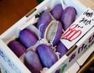 Nho Nhật siêu đắt 300.000 đồng/quả bán tại Việt Nam có gì đặc biệt
