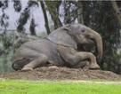 Tác dụng của các vết nứt trên da voi