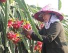 Trung Quốc quyết định đột ngột, vạn nông dân Việt khóc ròng