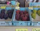 Cảnh sát Nhật Bản điều tra vụ mất trộm 1 quả nho