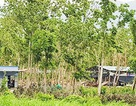 """Giám đốc Sở """"nhận khuyết điểm"""" vì cấp dưới giao trái phép cả trăm ha rừng"""