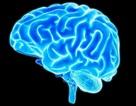Não tổ chức những kí ức có thể quên, không thể xóa trong khi ngủ