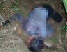 Xác định nguyên nhân ban đầu nghi án chồng giết vợ rồi treo cổ tự tử