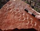 Phát hiện dấu chân sinh vật kì lạ cách đây 310 triệu năm