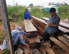 Bị truy đuổi, các đối tượng chở gỗ lậu hất tung 22 khúc gỗ xuống quốc lộ