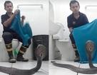 Bí kíp xử lý khi bắt gặp rắn độc trong… nhà tắm?