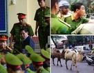 Cựu tướng công an hầu tòa và đàn lạc đà bất ngờ dạo phố