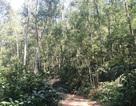 Ngang nhiên chặt phá rừng đặc dụng