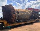 """Vụ chở cây """"siêu khủng"""": Xử phạt 12,5 triệu đồng, buộc cắt bớt ngọn cây"""