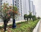 Ngắm chung cư siêu sang 10 triệu/m2 sắp bàn giao của Tập đoàn Mường Thanh