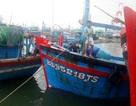 """Ngư dân Bình Định chủ động neo đậu tàu thuyền """"né"""" bão số 9"""