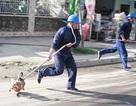 Hà Nội lập tổ phản ứng nhanh bắt chó thả rông