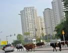 Siêu dự án Bắc An Khánh ra sao sau một năm về tay chủ mới?
