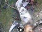Bước đầu xác định được các đối tượng giết khỉ ở Hà Tĩnh