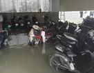 Hàng trăm ô tô, xe máy chìm trong hầm nước chung cư