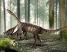 Phát hiện hoá thạch khủng long cổ dài cổ nhất từng được biết đến