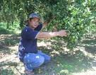 Lâm Đồng: Bỏ phố lên núi trồng cây ăn trái cho thu hoạch quanh năm
