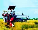 Máy gặt vô lăng mang thương hiệu Nhật đã được sử dụng ở Việt Nam