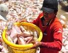 Đồng Nai hỗ trợ hơn 12 tỷ đồng vụ cá bè chết trên sông La Ngà