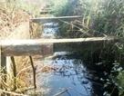 Vụ bò ngã làm lộ... bê tông cốt gỗ: Sẽ đập thêm thanh giằng để kiểm tra