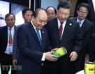 Thủ tướng: Việt Nam muốn cùng Trung Quốc thúc đẩy kinh tế, cùng có lợi