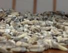 Bí ẩn bức tường giấu 1.000 chiếc răng bị phát hiện trong quá trình xây dựng