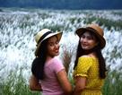 Quảng Ngãi: Cánh đồng hoa lau trắng như mây giữa dòng Trà Khúc