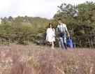 Miễn phí cho khách tham quan du lịch tại Mùa hội cỏ hồng Langbiang