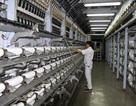 """Bắt tay với Tập đoàn An Phát Holdings: Dự án PVTEX """"sống lại"""""""