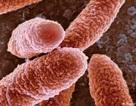 Siêu khuẩn giết chết 33.000 người ở châu Âu mỗi năm