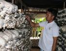Quảng Bình: Cặp vợ chồng bỏ việc nhà nước về trồng nấm kiếm tiền triệu mỗi ngày