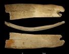 Phát hiện vương miện kì lạ 50.000 năm tuổi ở Siberia