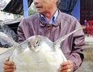 Thả rùa biển lớn, quý hiếm về tự nhiên