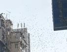 """Xóm nghèo Hong Kong phát sốt vì cơn """"mưa"""" tiền"""