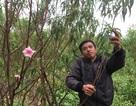 Thời tiết thất thường, nông dân lo mất vụ hoa Tết