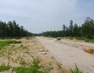 """Nhiều dự án """"treo"""" đang tàn phá hàng nghìn ha rừng phòng hộ"""
