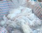 Phát hiện hơn 200 con lợn nghi lở mồm long móng