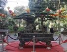 """""""Kỳ họa, dị thảo"""" hội tụ ở Hà Nội khiến dân chơi cây cảnh phát sốt"""